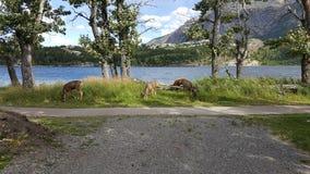 wildlife Royalty-vrije Stock Foto