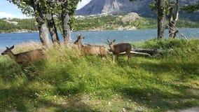 wildlife Στοκ Εικόνα