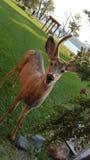 wildlife Royalty-vrije Stock Foto's