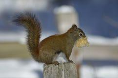wildlife Foto de Stock