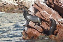 wildlife Fotos de Stock
