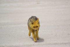 wildlife Fotos de Stock Royalty Free