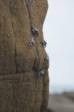 wildlife Imagem de Stock