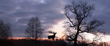 wildlife Stock Afbeelding