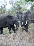 wildlife στοκ φωτογραφία