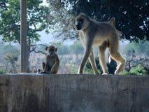wildlife Стоковое Фото
