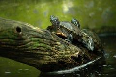 wildlife Fotografie Stock Libere da Diritti