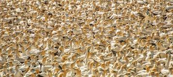 wildlife Royalty-vrije Stock Afbeeldingen