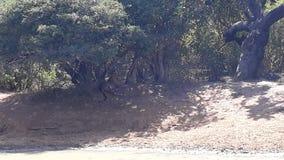 wildlife Стоковые Изображения RF