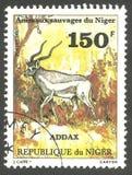 Wildlife, Addax royalty free stock photos