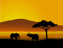 Wildlife africa Royalty Free Stock Photos