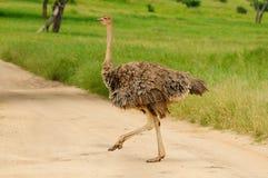 Wildlife in Africa Stock Photo