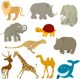 Wildlife animals. Set of various wildlife animals Stock Photography