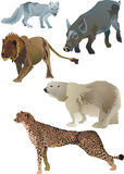 Wildlife animals Royalty Free Stock Image