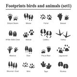 Wildlife animals and birds footprint, animal paw prints vector set. Footprints of variety of animals, illustration of. Black silhouette footprints Royalty Free Stock Photo