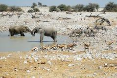 Wildlife animals in the Etosha National Park, Namibia Stock Photo