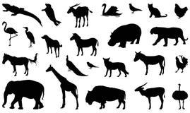 Free Wildlife Animals Silhouette - Undomesticated Animal Species Stock Photo - 136347610