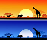 Wildlife background Stock Images