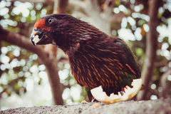 Wildlife in Bali birds and reptiles park Royalty Free Stock Photo