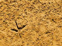 Wildlife bird footprints Stock Photo