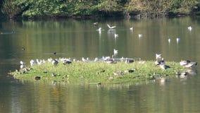 Wildlife and bird sanctuary stock footage