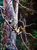 Wildlife of the bird on the tree Stock Image