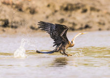 Snakebird  Royalty Free Stock Photography