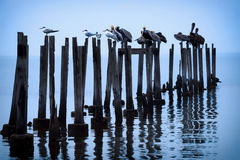 Wildlife Birds on Posts Royalty Free Stock Images