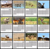Wildlife calendar 2016 stock images