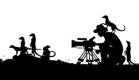 Wildlife cameraman. Editable vector silhouettes of a cameraman filming meerkats with all elements as separate objects royalty free illustration