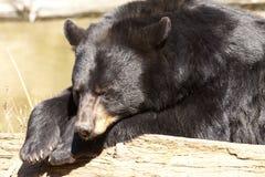Wildlife of canada Stock Image