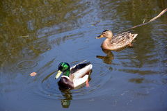 Wildlife by the Canal Stock Images