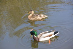 Wildlife by the Canal Royalty Free Stock Photography