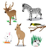 Wildlife Stock Photo