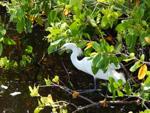 Wildlife of Charlotte Harbor Stock Photos