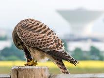 Wildlife in the City Stock Photo
