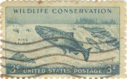Wildlife Conservation Stamp. USA wildlife conservation three cent stamp featuring King Salmon swimming upstream Royalty Free Stock Photography