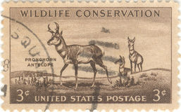 Wildlife Conservation Stamp. USA wildlife conservation three cent stamp, featuring Pronghorn antelope Royalty Free Stock Photos