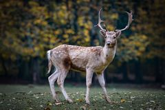 Wildlife, Deer, Fauna, Mammal