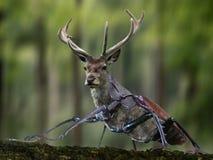 Wildlife, Deer, Fauna, Mammal Stock Photos