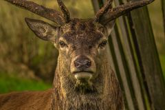 Wildlife, Deer, Fauna, Mammal Stock Images