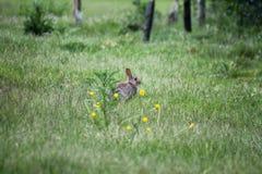 Wildlife, Ecosystem, Fauna, Mammal royalty free stock photo