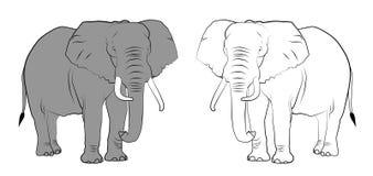 Wildlife - Elephants Royalty Free Stock Photos