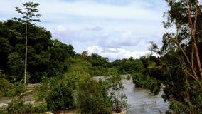 Wildlife Equatorial Africa, Equatorial Guinea stock video footage