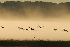 Wildlife flight stock photo