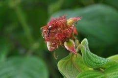 Wildlife  flower Stock Photo