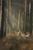 Wildlife in the Forest Royalty Free Stock Images