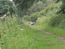 Wildlife Friendly Towpath. Royalty Free Stock Photos