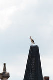 Wildlife German Stork Royalty Free Stock Image