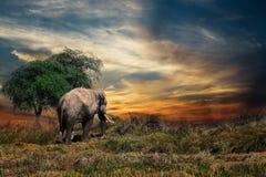 Wildlife, Grassland, Elephants And Mammoths, Savanna Royalty Free Stock Photo